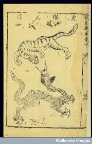 tigre i drac